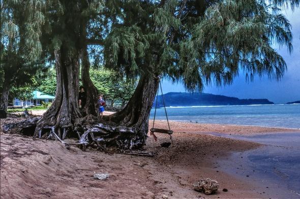 Tree Swing in Kauii