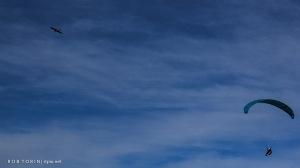 Paraglider & Kestrel