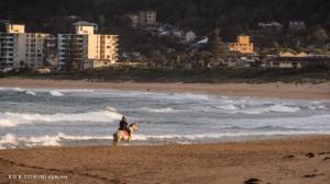 Horse riding on Narrabeen Beach