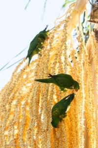 Feeding on the Palm